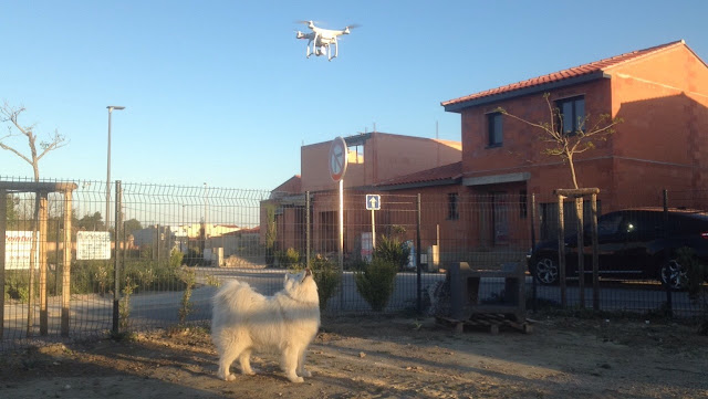 chien qui regarde un drone phantom 3 4K