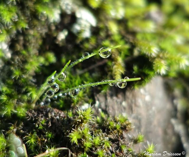 gouttes de pluie sur brins d'herbe Montagne Noire Tarn