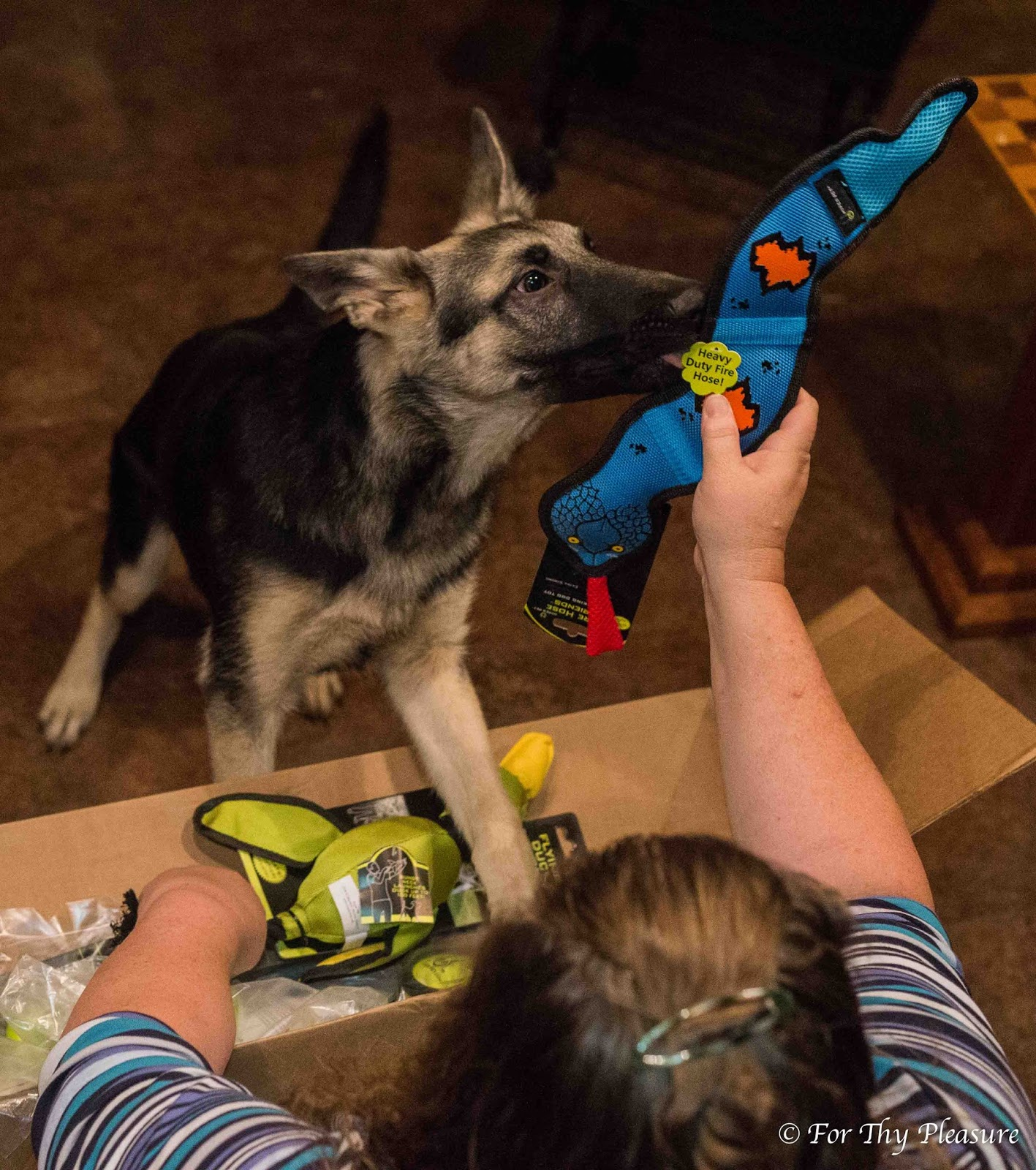 Hyperactive Puppy: At The Fence: Hyper Pet Dog Toys For The Holidays
