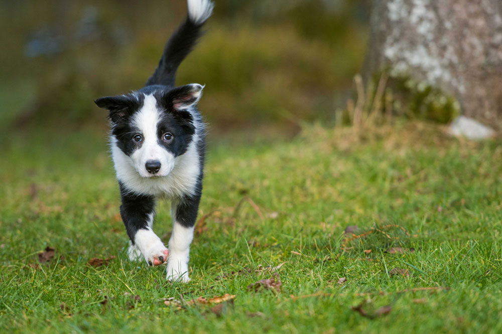 Rewarding accomplished how to train your dogs Visit our dog