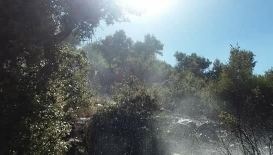 فوج اطفاء السويداء بالتعاون مع الاهالي يخمد حريقاً في حرش قرية مياماس بالسويداء