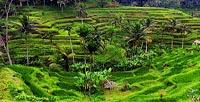 Teras Padi Tegalalang - Bali Besakih Tour