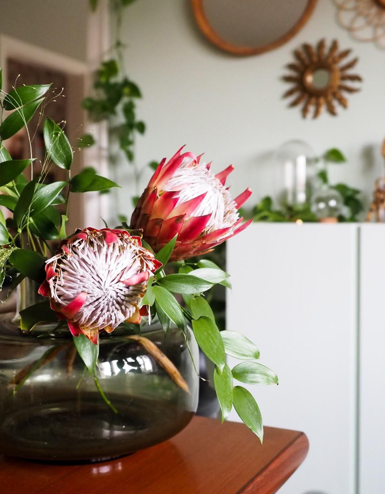 Protea kukka