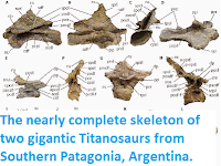 http://sciencythoughts.blogspot.co.uk/2014/09/the-nearly-complete-skeleton-of-two.html