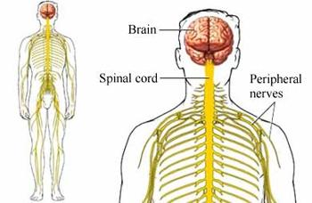 Image result for Polyneuritis