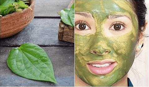 Cara Membuat Masker Daun Sirih Untuk Wajah Beserta Manfaatnya