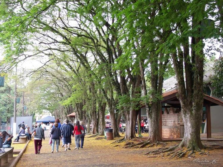 árvores holambra