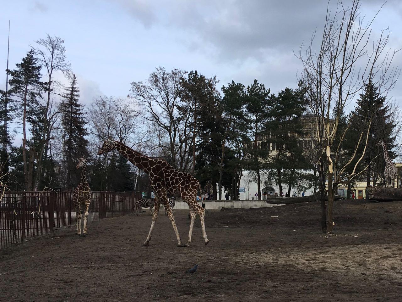 Wszędzie Dobrze Zoo I Afrykarium Ogród Zoologiczny