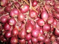 Manfaat jus bawang merah bisa mengatasi Rambut rontok dan Botak