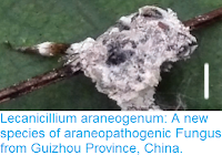 http://sciencythoughts.blogspot.co.uk/2017/04/lecanicillium-araneogenum-new-species.html