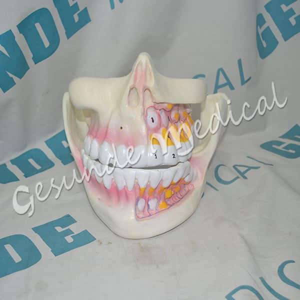toko torso gigi manusia