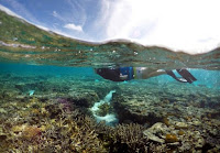 A tourist snorkels above coral in the lagoon located on Lady Elliot Island on the Great Barrier Reef, north-east from the town of Bundaberg in Queensland, Australia, June 9, 2015. (Credit: Reuters/David Gray/File Photo) Click to Enlarge.