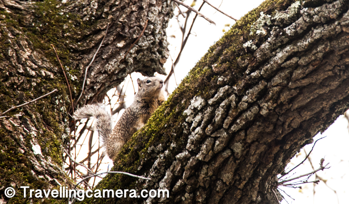 There are plenty of Squirrels around the Sunol Hiking park and they can be digging into the ground or jumping around the trees.