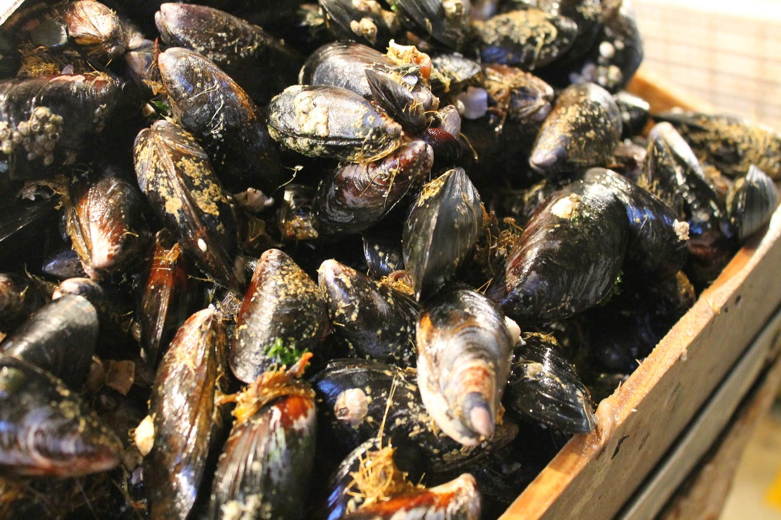Chile shellfish