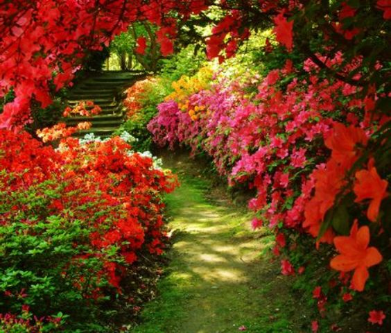 Pictures Of Beautiful Flowers Gardens