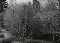 Litt vinterstemning en  kald novemberkveld :-) (Foto: Gro Jeanette Nilsen)
