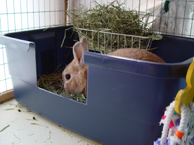 rabbit litter tray liner