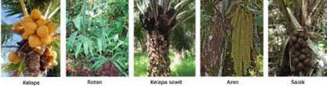 Pengertian dan Macam-macam Contoh Tumbuhan Monokotil