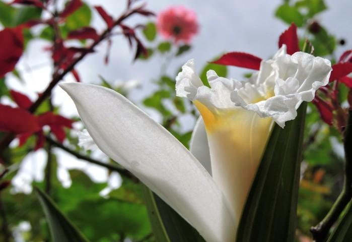 flor blanca con fondo rosa centro amarillo