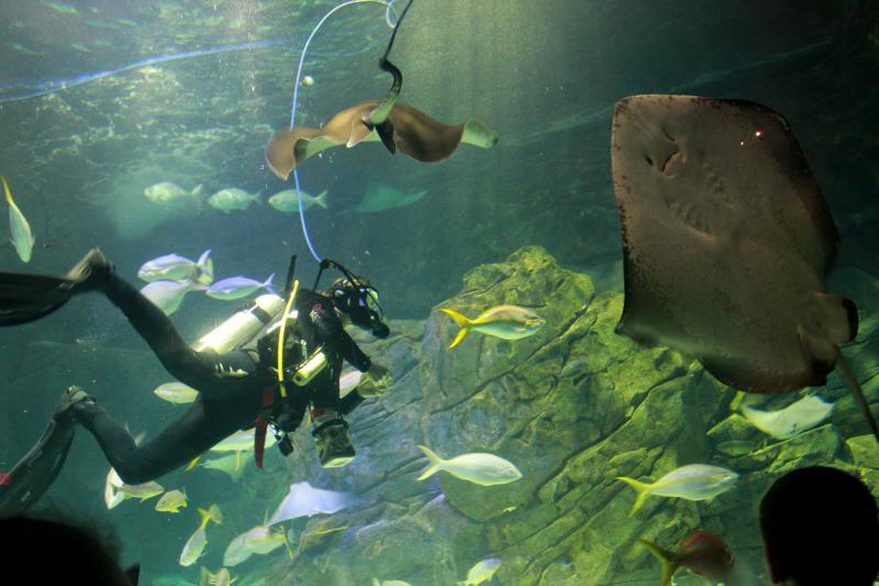 Celebrating Morley's 1st Birthday at Ripley's Aquarium of Canada