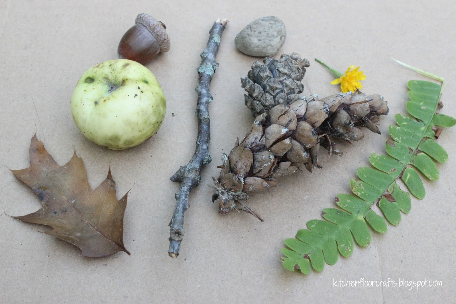 objects nature sink float natural crafts exploration flower object different fern pinecones sized rock boys kitchen