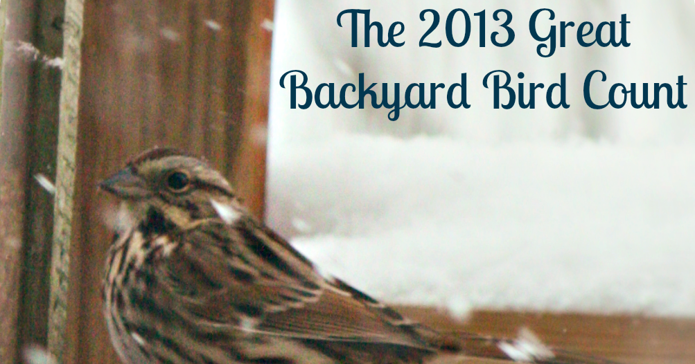 How The Sun Rose: The Great Backyard Bird Count is coming