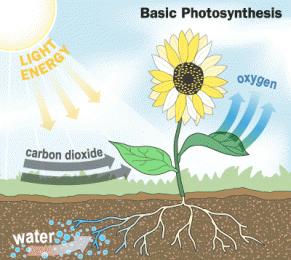 gambar proses  fotosintesis