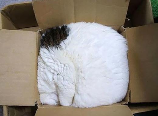 """Những chú mèo có tướng ngủ """"bá đạo"""" nhất quả đất"""