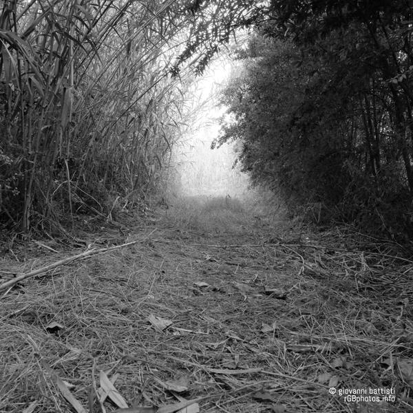 Sentiero tra le canne palustri