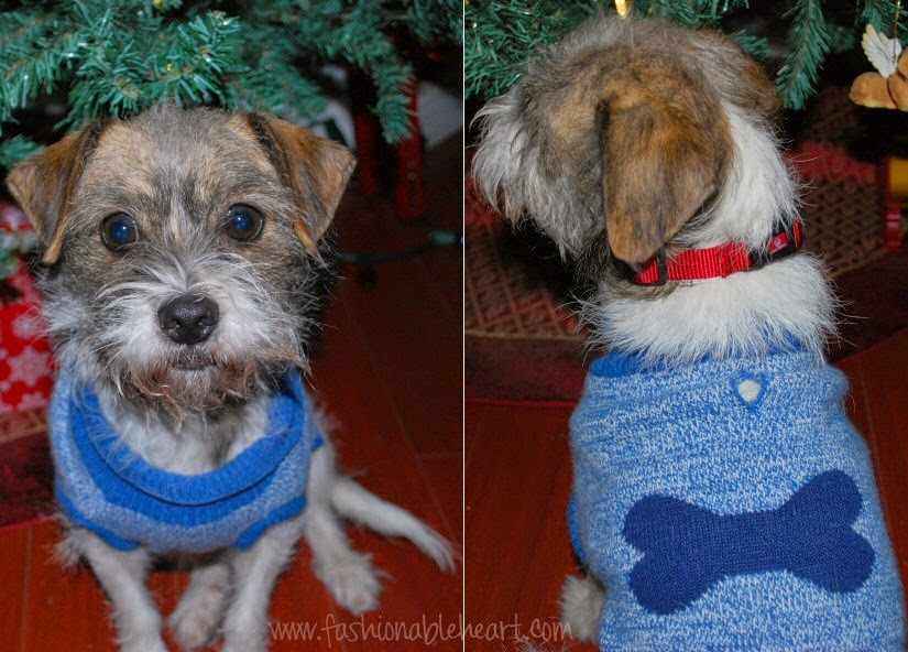 christmas spirit festive dog fashion