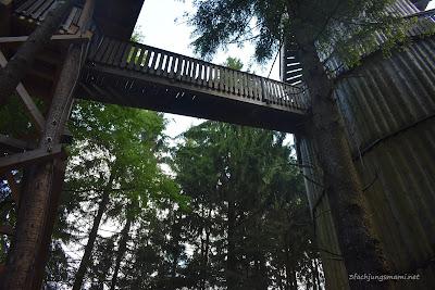 Baumkronenweg 15 Meter hoch