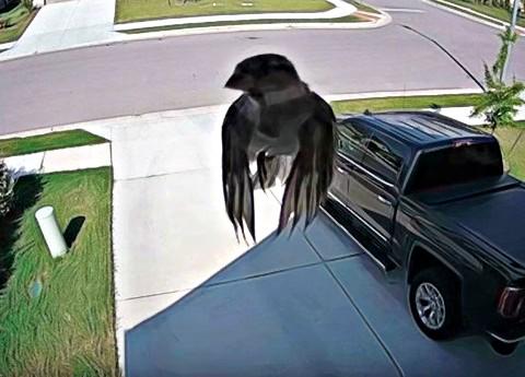 Conspiración en la Matrix: Un pájaro flota sin mover sus alas