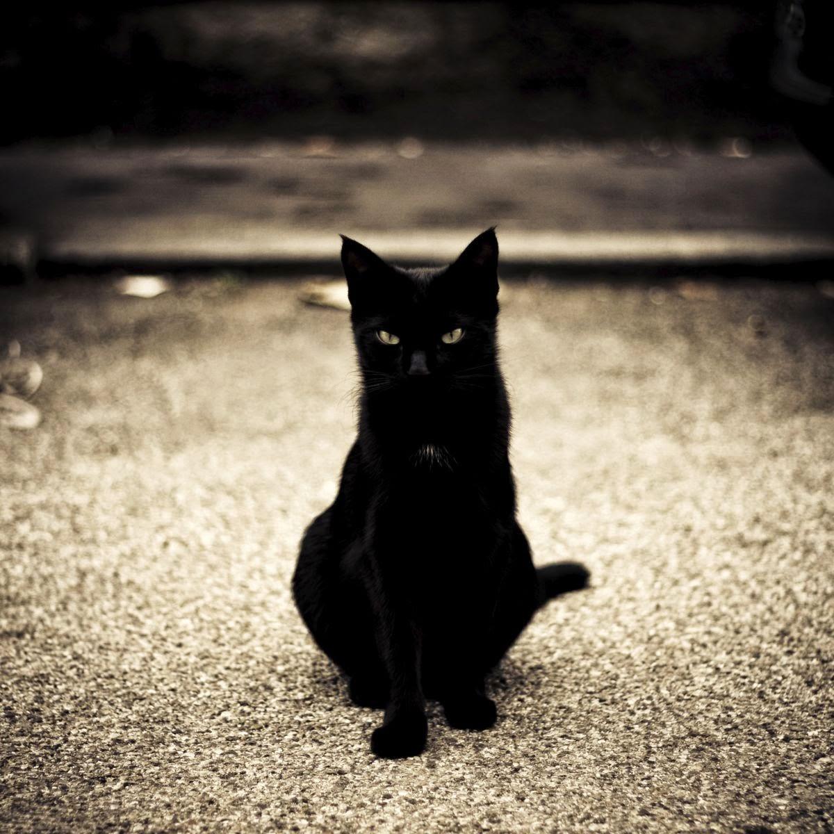 Открытки, картинки с черным котом изящные