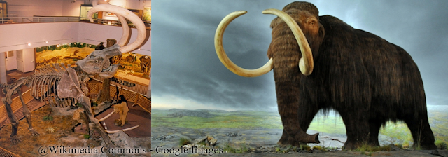 Gajah Purba Terbesar