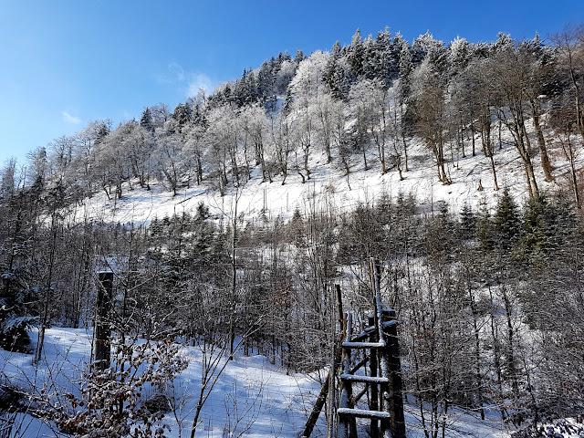 Gdzie na narty i sanki na Dolnym Śląsku? - Schronisko PTTK Andrzejówka - Góry Suche - Park Krajobrazowy Sudetów Wałbrzyskich