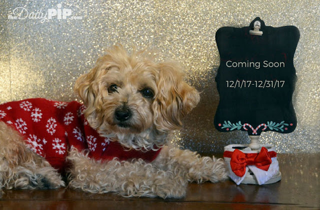 Ruby is all ready for 31 Ways (in 31 Days) To Celebrate the Holidays By Helping Animals