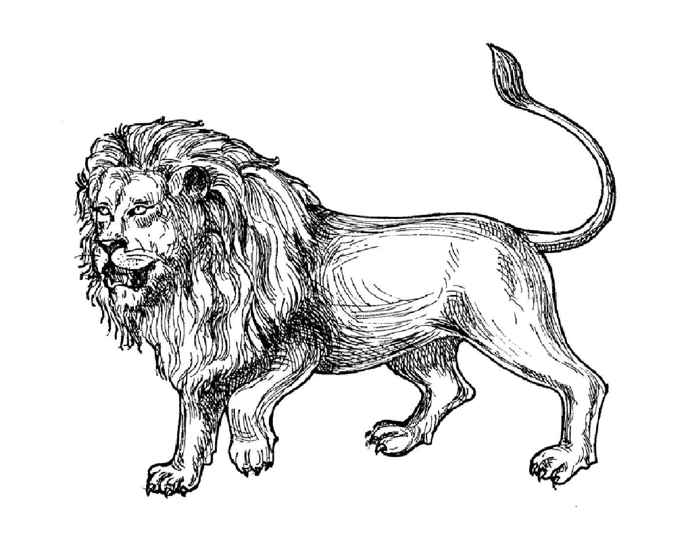 Tranh tô màu con sư tử 0