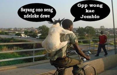 kambing dan orang lucu standar