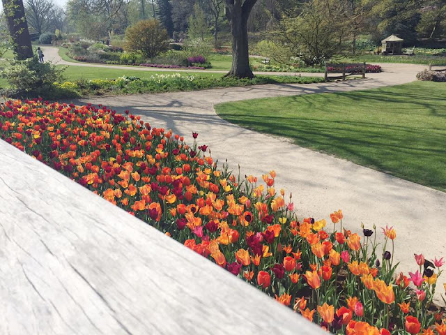 RHS-Harlow-Carr-Red-And-Orange-Tulips