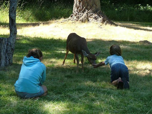 tame deer on Jones Island