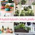 قائمة بأفضل النباتات المنزلية لتنقية الهواء