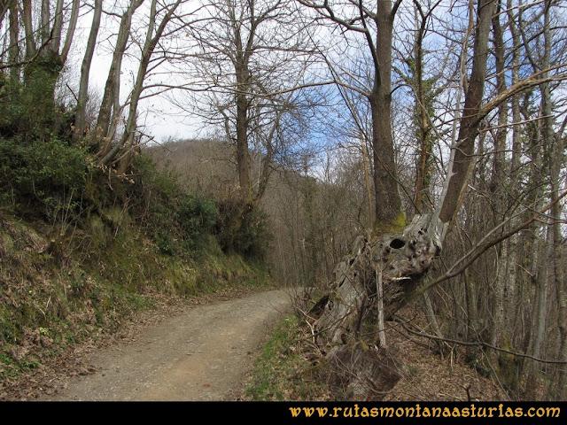 Ruta Belerda-Visu La Grande: Pista de tierra entre árboles