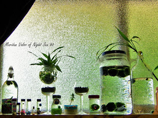 A few of my marimo; I set a bunch of my marimo up in my window.