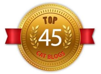 Top 45 Cat Blogs
