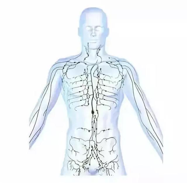 人體精、氣、神的開關特效穴,開九竅,打開關(調節神智、運化氣血,預防疾病)