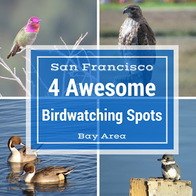 Four Awesome Birdwatching Spots in the San Francisco Bay Area