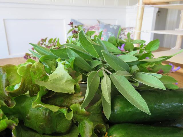 Urter og grønnsaker fra drivhus og pallekarmer. Furulunden