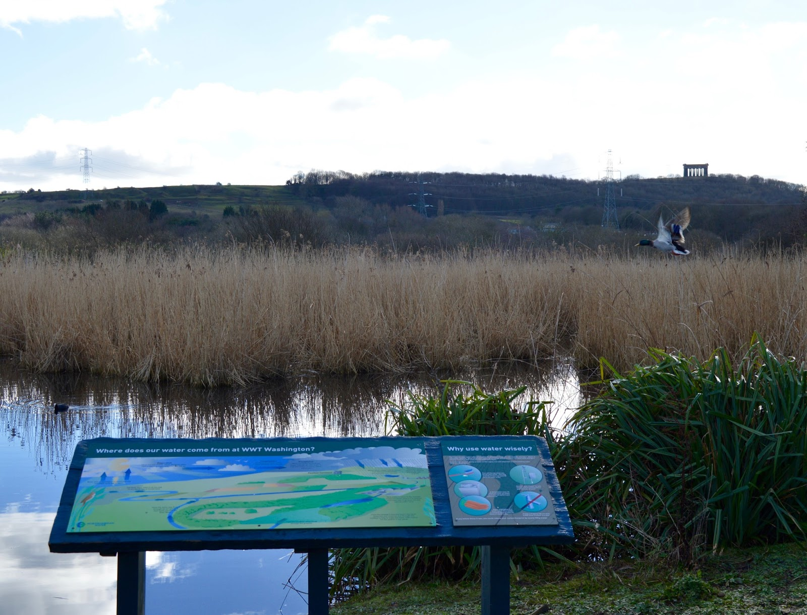 WWT Washington Wetland Centre | An Accessible North East Day Out for the Whole Family - views of Penshaw monument