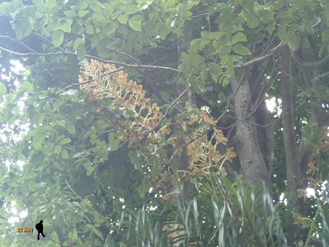 Mencari Anggrek Raksasa di Kebun Raya Bogor. (Tidak) Malu Bertanya, Tetap (Ter)Sesat si Jalan.