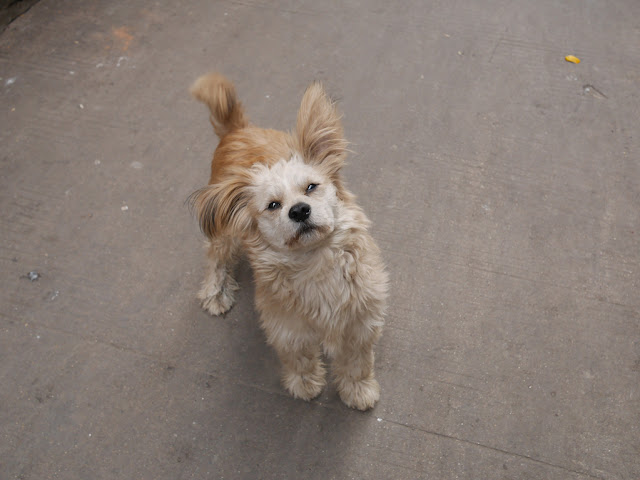 friendly dog Gudesi Road (古德寺路) in Wuhan